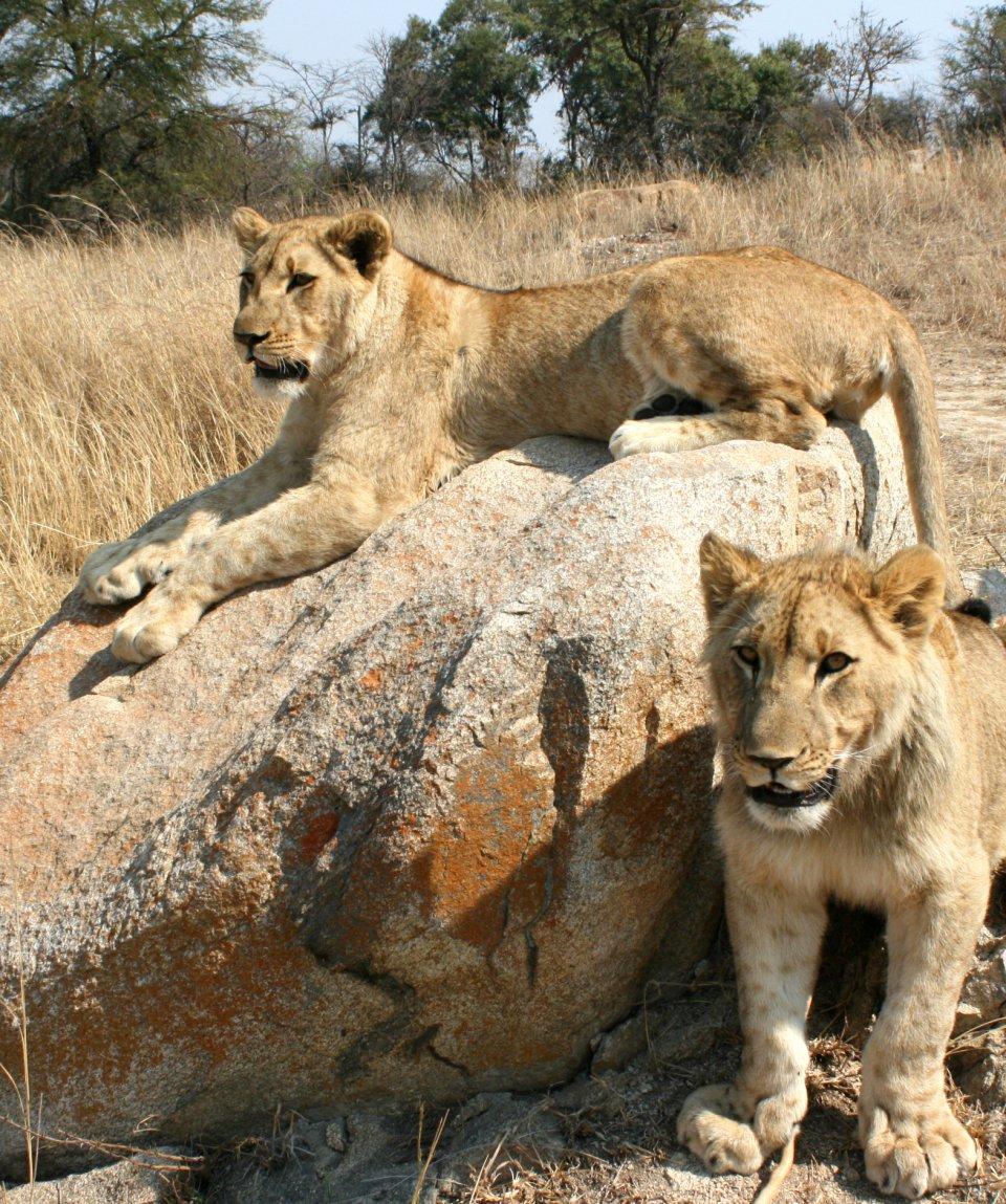 african-explorer-victoria-falls-pretoria-leoni