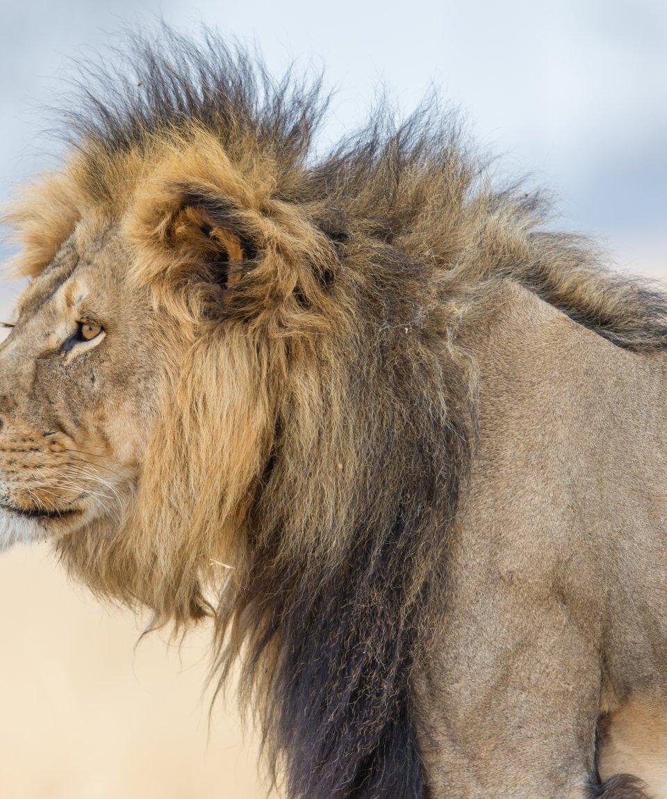 Hwange-National-Park-leone
