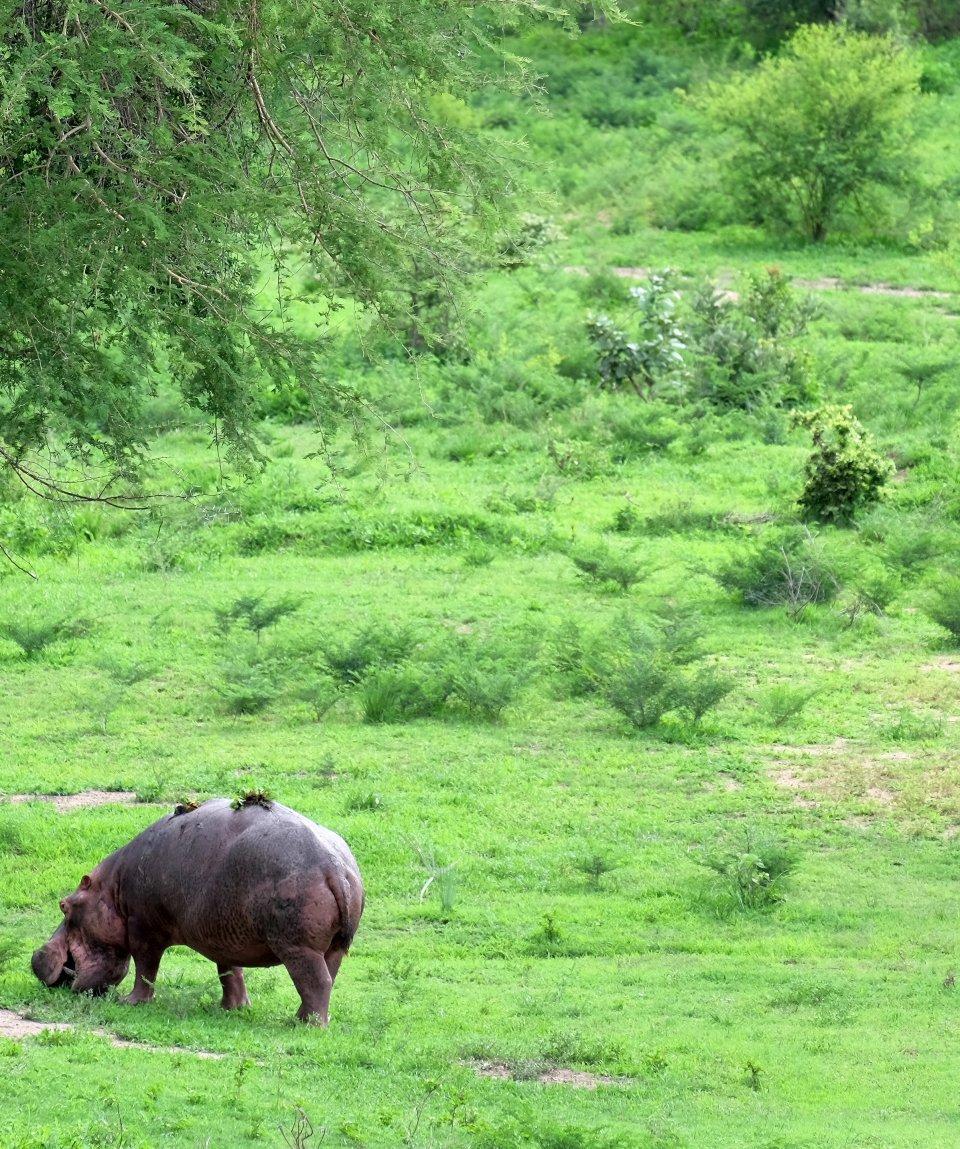 parco-nazionale-di-south-luangwa